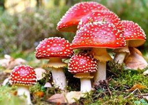 tratament comun cu ciuperci)