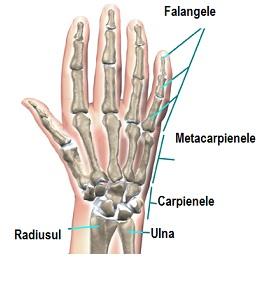 durere la nivelul articulației radiocarpiene)