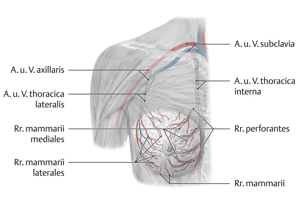 inflamația țesuturilor periarticulare ale articulației șoldului
