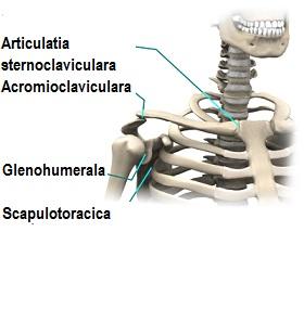 durerea articulației umărului a fost inflamată durere la înghițirea articulației temporale