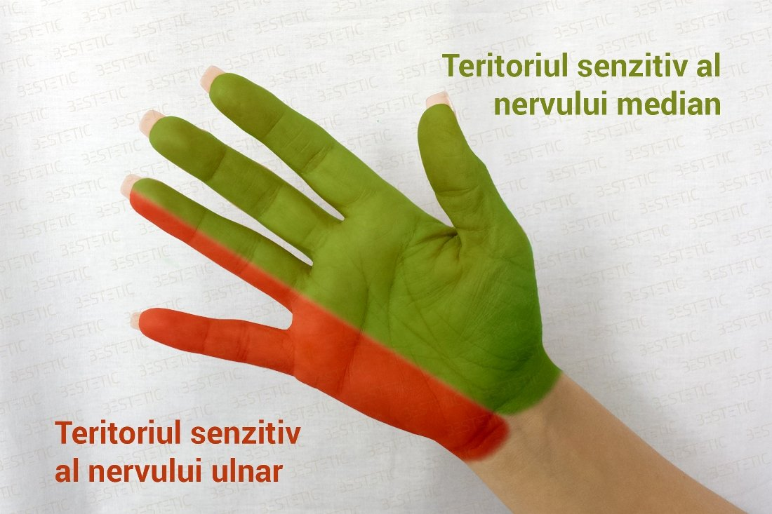 dureri de umăr și amorțeală a degetelor glandele bolii articulare