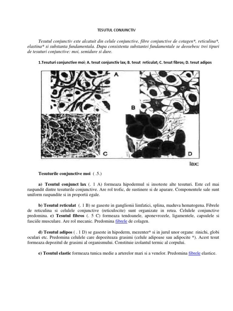 centru-respiro.ro - Ţesutul conjunctiv (5)