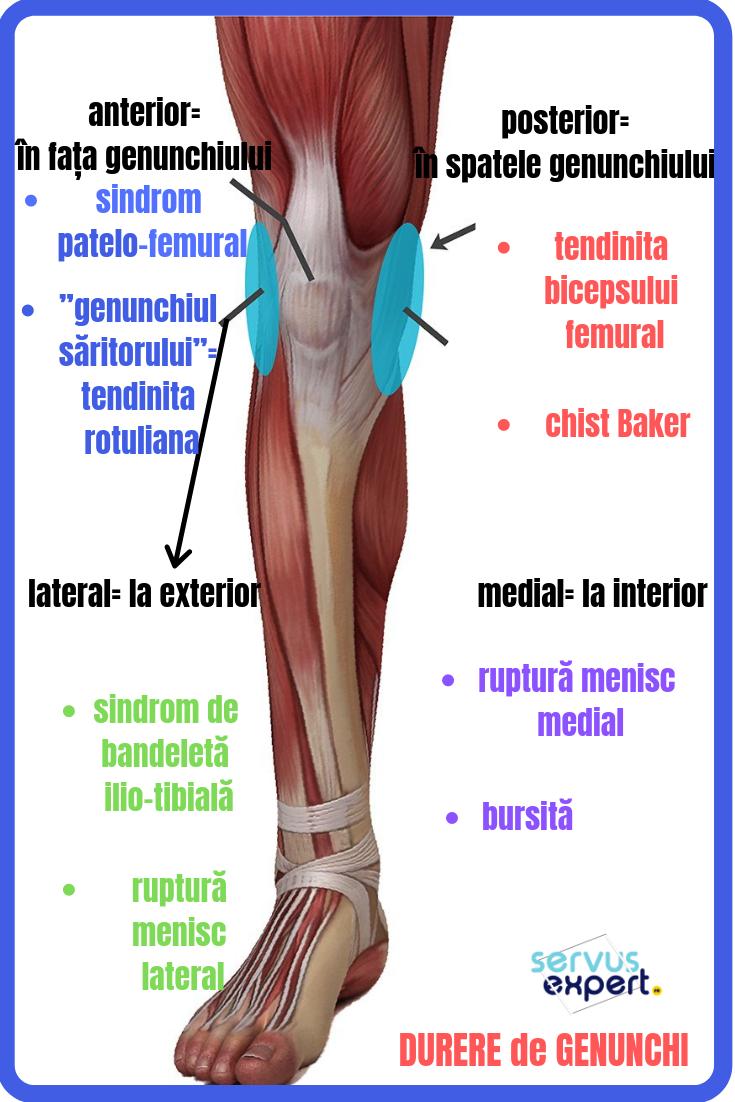 de ce îmi doare articulația în genunchi