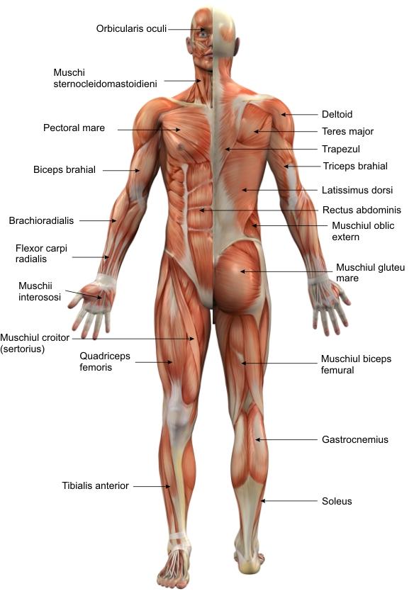 dureri de șold în timpul alergării)