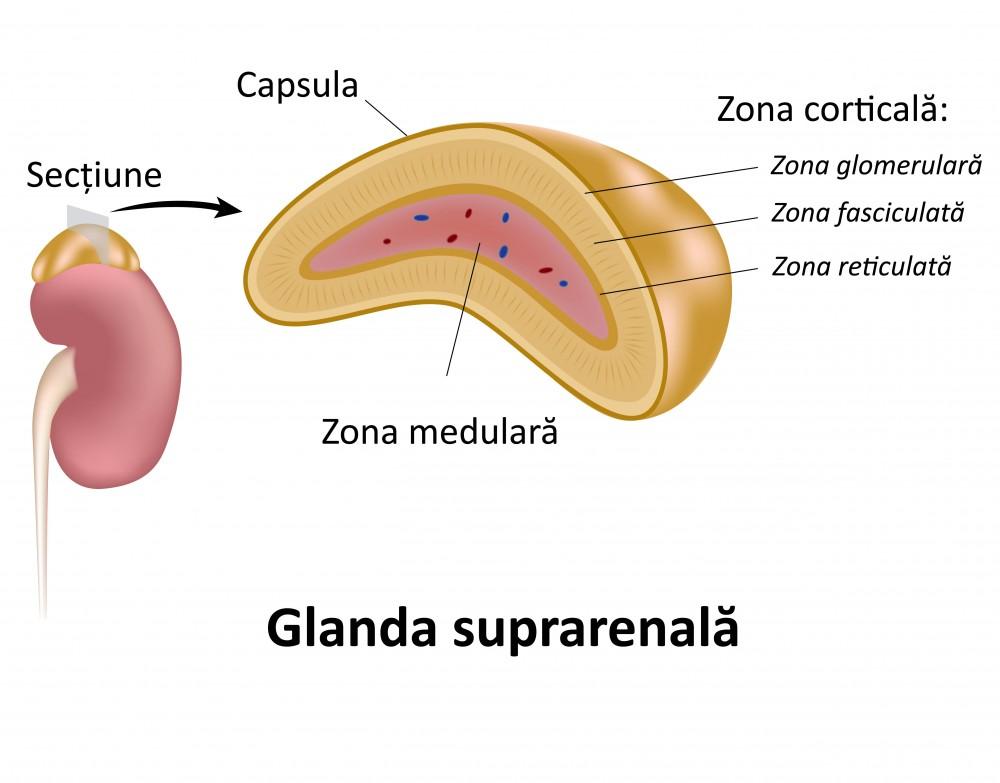 dureri ale glandelor suprarenale)
