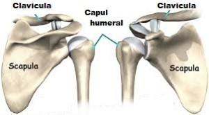 inflamația unguentelor articulației cotului despre boala articulară este vorba